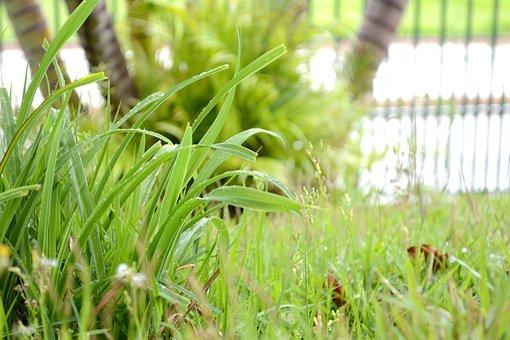 Plantas, Verdes, Gramando, Capim, Gotas De Chuva, Green