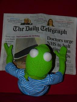 Newspaper, Kermit, Frog, Read, Daily Telegraph, Doll
