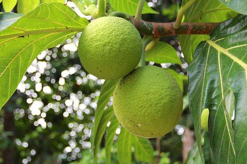 Fruit, Tropics, Plant, Central America, Exotic, Jungle