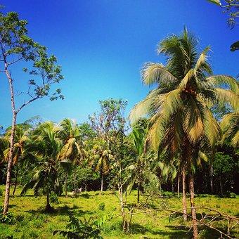 Costa Rica, Pura Vida, Central America, Jungle, Green