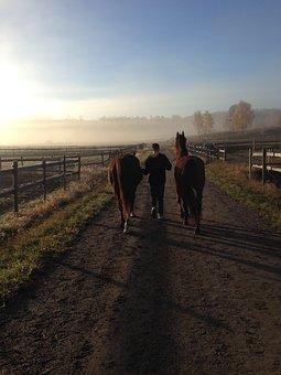 Horses, Morning Haze, Summer Morning, Road