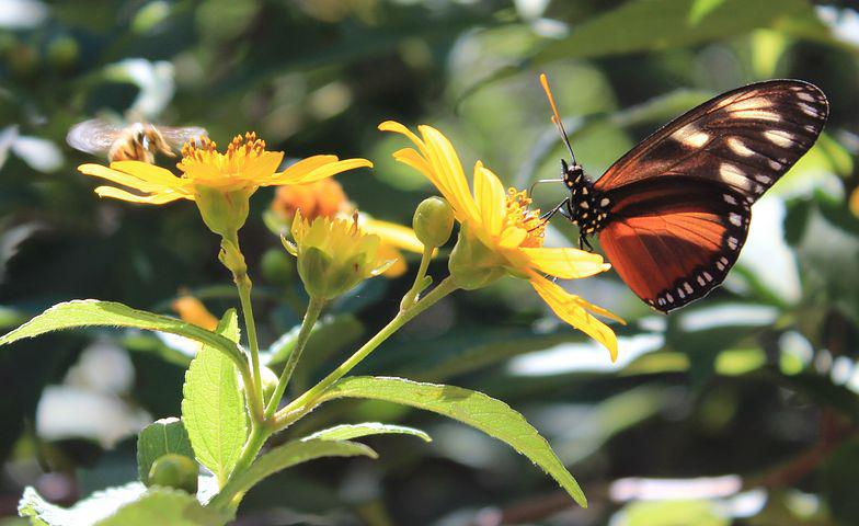 Butterfly, Insect, Central America, Tropical, Jungle