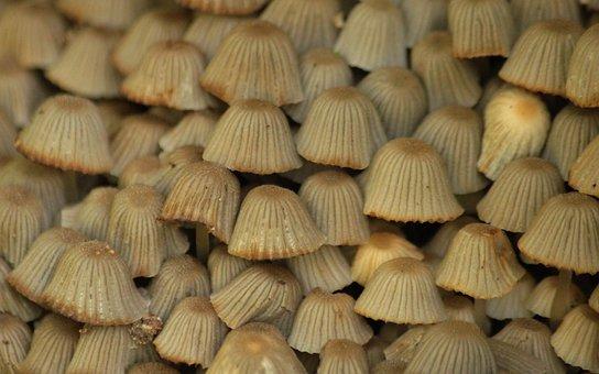Mushrooms, Mushroom, Grey, Nature, Forest, Autumn