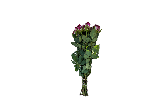 Strauss, Roses, Flamed, Free, Png, File