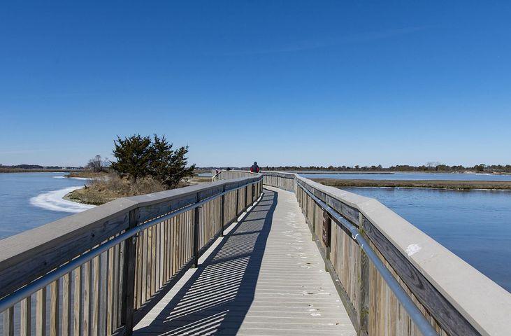 Assateague, Park, Ice, Cold, Wildlife, Shoreline, Bay
