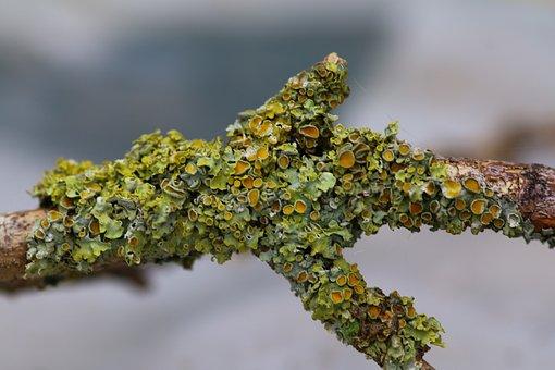 Branch, Foam, Nature, Lichen