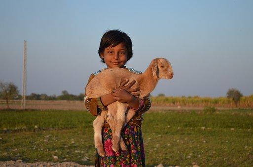 Child, Goat, Cute, Animal, Little Kid, Baby