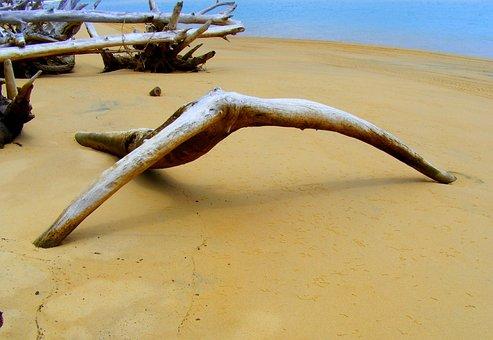 Driftwood, Ocean, Beach, Sand, Coast, Wood, Water, Sea