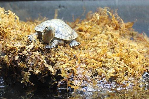 Turtle, Moss, Animal, Nature, Shell, Reptile, Wildlife