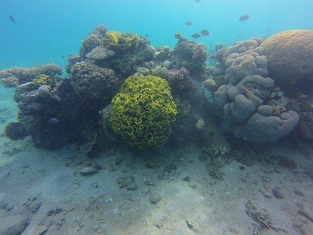 Coral, Diving, Swim, Underwater, Divers, Animal