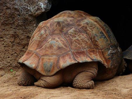 Turtle, Panzer, Tail, Feet, Turtle Tail, Turtle Feet