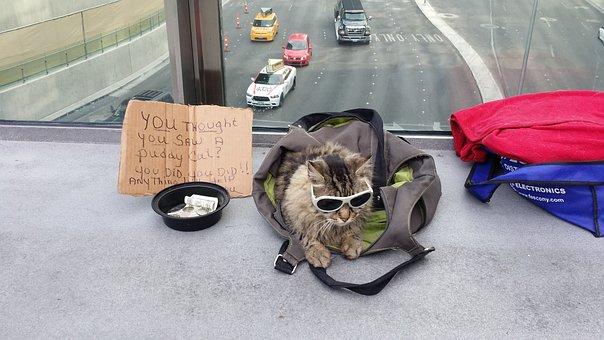 Begging, Cat, Vegas