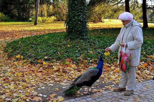 Lazienki Park, Poland, Park, Warsovie, Warsaw, Peacock