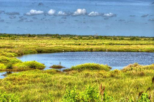 Cape Canaveral, Swamp, Lake, Water, Marshland, Grass