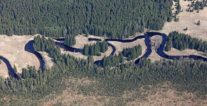 Meanders, Vltava, šumava, River, Forest, Water, Nature