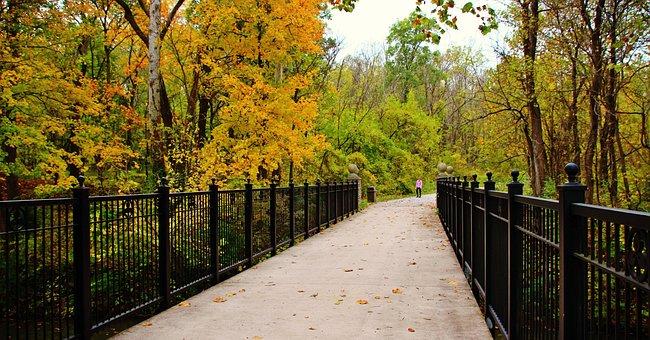 Park, Fall, Leaves, Gate, Bridge, Yellow, Outdoor