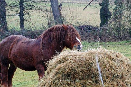 L'aquila, Abruzzo, Italy, Horse, Horses, Animals, Hay