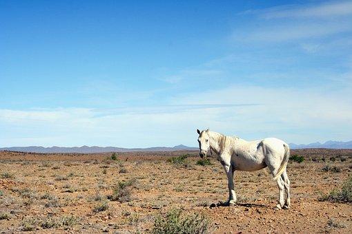 Horse, Karoo, Hot, Arid, Neglected, South Africa