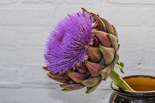 Artichoke, Blossom, Bloom, Composites, Crop