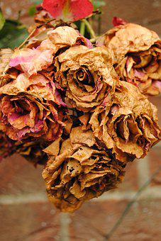 Flowers, Aged, Withered, Beige Colours