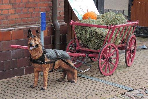 Handcart, Fig, Dog, Cannon Cars, Hay, Pumpkin