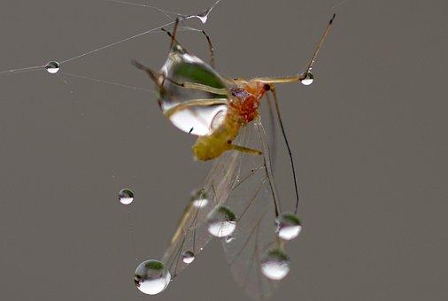 Cobweb, Dew, Autumn, Morgentau, Web, Moist, Nature