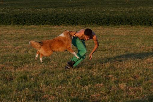 Collie, Dog Training, Dog Exercise