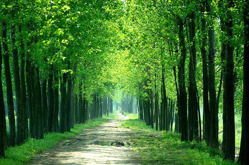 Farmland, Agriculture, Every Day, Views, Greenway, Farm