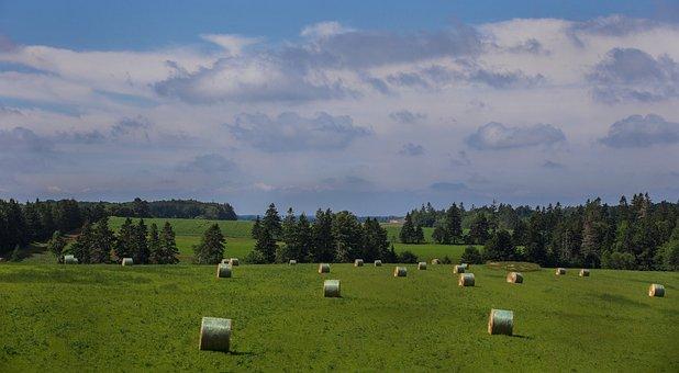 Landscape, Bales Of Hay, Hay Bales, Fields, Grass
