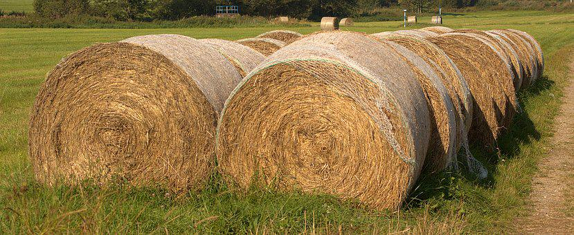 Hay Bales, Summer, Agriculture, Hay, Harvest, Bale