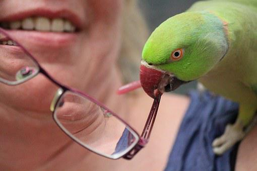 Woman, Parrot, Glasses, Cheeky, Bill, Snap, Hold Tight