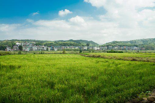 Autumn, In Rice Field, Sky, Sunshine, In Rural Areas