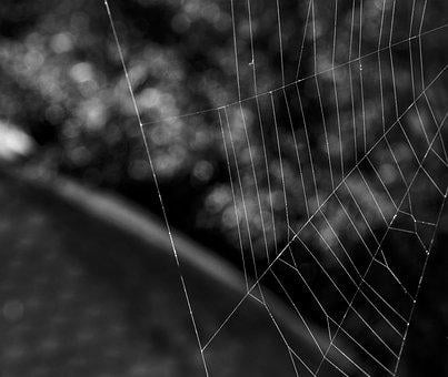 Spider, Web, Network, Garden, Nature, Life, Insect