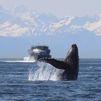 Humpback, Whale, Breeching, Alaska, Nature, Wildlife