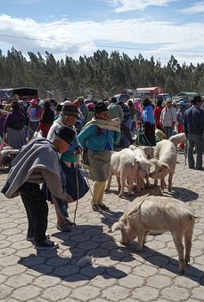 Market, Ethnic Minority, Quechua, Pigs