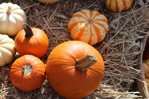 Pumpkins, Hay, Squash, Seasonal, Fall, Autumn, Orange