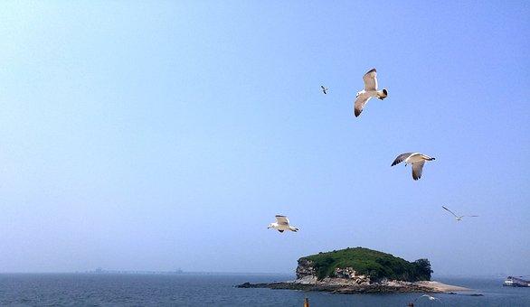 Korea, Sihwa Lake, Sihwa Lake Rest Area, Seagull
