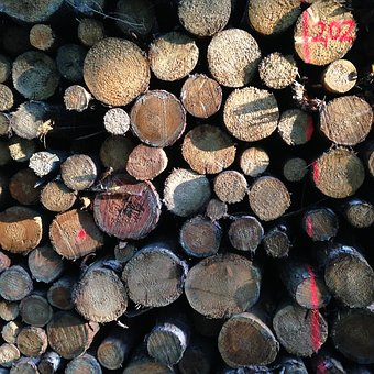 Tree Trunks, Wood, Forest, Stock, Nature, Log, Brown
