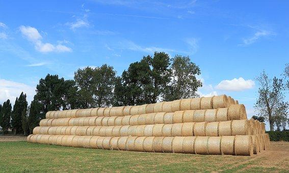 Straw, Straw Bales, Field, Round Bales, Summer