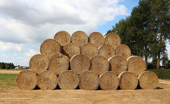 Straw, Straw Bales, Field, Stubble, Round Bales, Summer