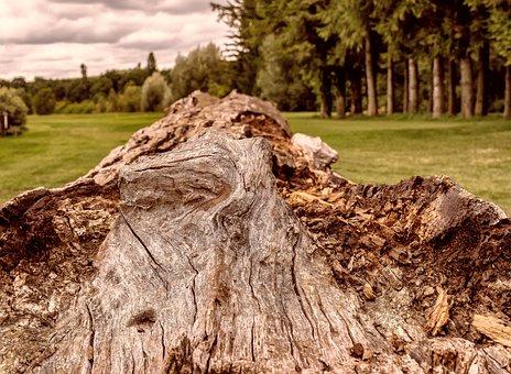 Tree, Wood, Tribe, Log, Nature, Like, Concerns, Rot