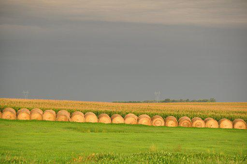 Hay, Round, Bales, Gold, Golden, Yellow, Harvest, Green