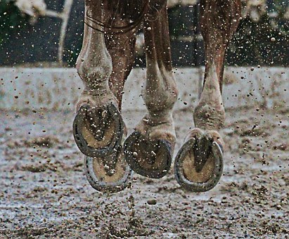 Horse, Hooves, Mud, Animal, Sport, Sporthorse, Action