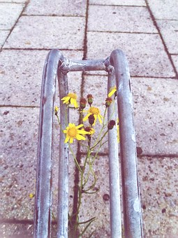 Bike Racks, Flowers, Yellow, Grow, Sidewalk, Blossom
