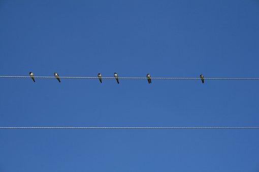 Bird, Sky, Wire, Against Sky, Birds, Feathered Race