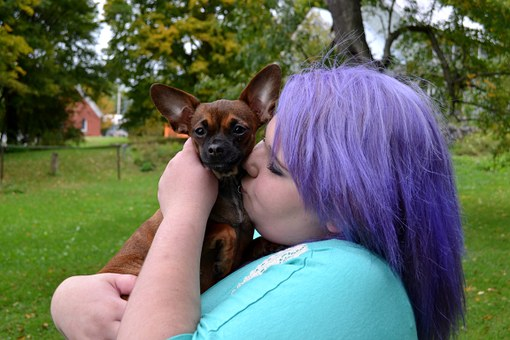 Dog, Puppy, Kissing, Cute, Chihuahua, Love, Purple Hair