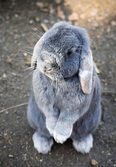 Bunny, Rabbit, Animal, Pet, Cute, Easter, Little