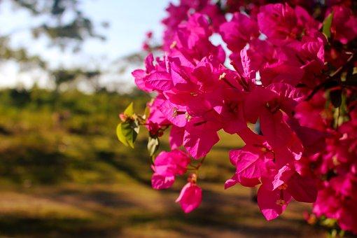 Flowers, Fuchsia, Garden, Plant, Color, Beauty, Leaves