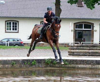 Horse, Versatility, Military-horse Riding