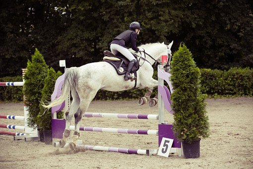 Show Jumping, Horse, Tournament, Obstacle, Reiter, Hop